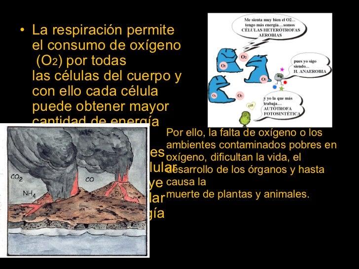LA RESPIRACION DE LOS SERES VIVOS Slide 3