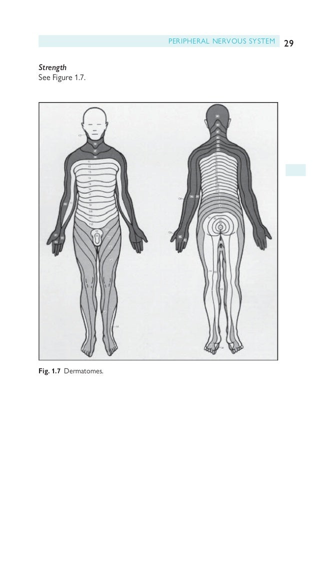 30 CHAPTER 1 Clinical approach Innervation of the upper limbs See Figures 1.8–1.12. Fig. 1.8 Brachial plexus. Reproduced w...