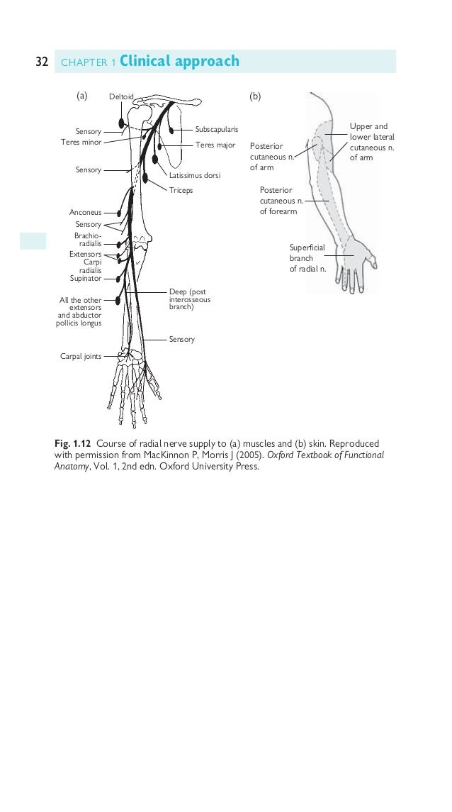 33PERIPHERAL NERVOUS SYSTEM Innervation of lower limb See Figures 1.13–1.17. Fig. 1.13 Lumbosacral plexus. Reproduced with...