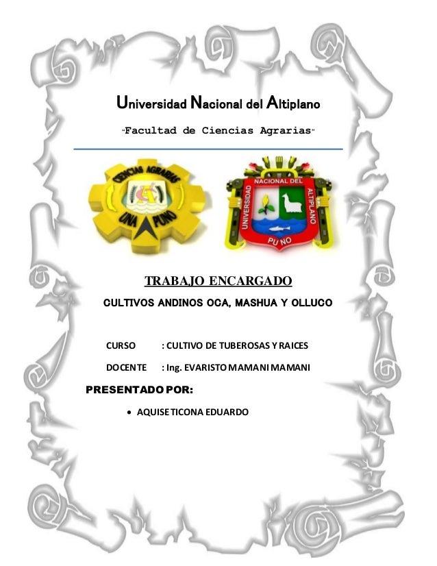"""Universidad Nacional del Altiplano """"Facultad de Ciencias Agrarias"""" TRABAJO ENCARGADO CULTIVOS ANDINOS OCA, MASHUA Y OLLUCO..."""