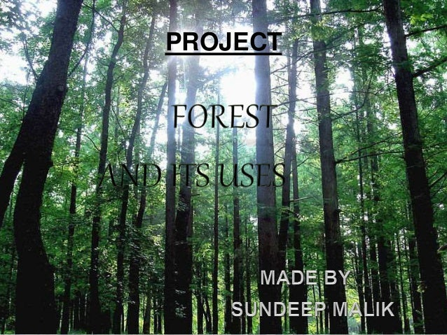 Usefulness of forests essay writing