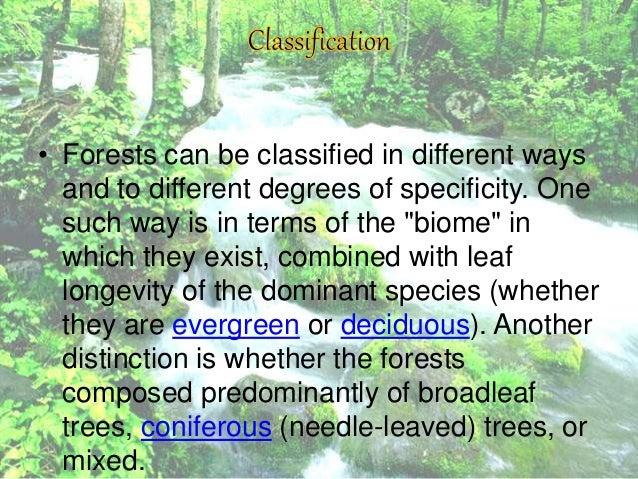 forests and its uses essay I background education about paper use and labor inefficiency and the environmental impact of forest extraction and the production and disposal of paper.