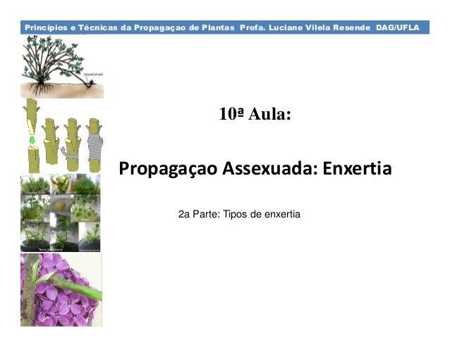 Princípios e Técnicas da Propagaçao de Plantas Profa. Luciane Vilela Resende DAG/UFLA  10ª Aula:  Propagaçao Assexuada: En...