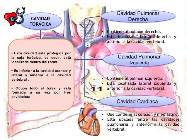 10 anatomia de planos, cuadrantes