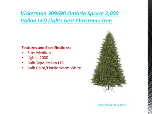 photos best local options for living christmas trees - Best Christmas Tree Type