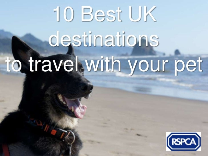 10 Best UK      destinationsto travel with your pet