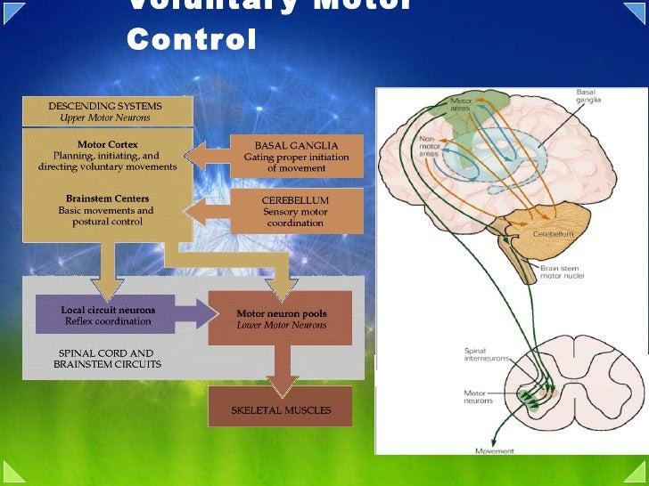 Voluntary Motor Control