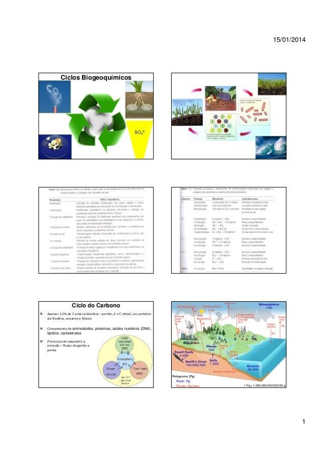 15/01/2014  Ciclos Biogeoquímicos  SO42-  Ciclo do Carbono Apenas 1,5% do C está na biosfera – porém, é o C móvel, ao cont...