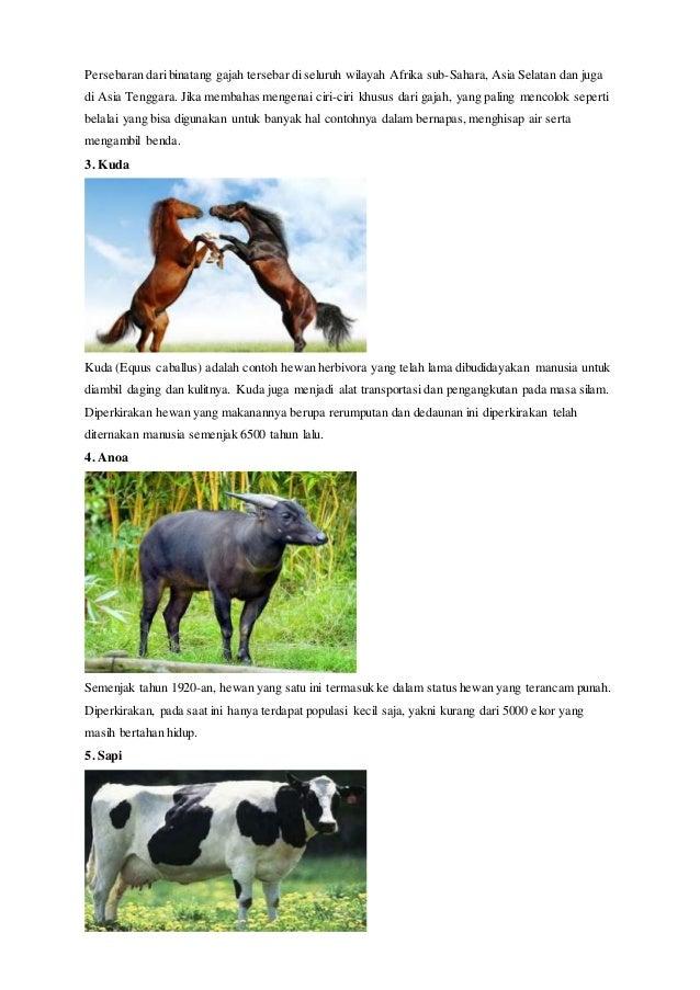 102 Gambar Hewan Dan Keterangan HD Terbaru