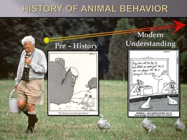 history application and outlook of behavioral The history and current applications of behaviorist theory behavioral psychology otherwise known as behaviorism is a theory of learning based upon the idea that all our behaviors are gained via conditioning.