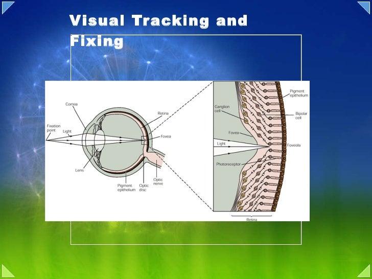 10d eye movement control