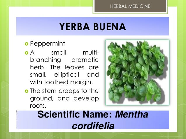 herbal medicines yerba buena Yerba buena (clinopodium douglasii) is a rambling aromatic herb of the mint family that is known and used as herbal medicine worldwide yerba buena is a perennial plant that grows up to 1 meter in height with oblong shaped leaves with toothed margins.