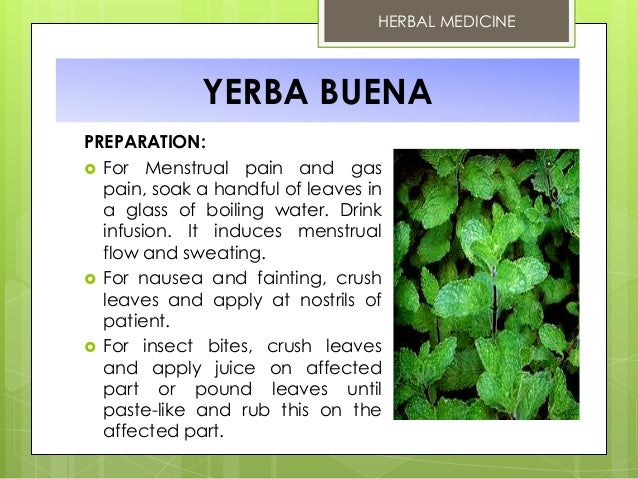 pansit pansitan essay Ulasimang bato | pansit-pansitan (peperomia pellucida) - arthritis and gout 10 yerba buena (clinopodium douglasii) - peppermint - used as an analgesic to relive body aches and pain.