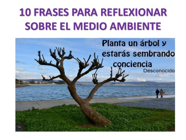 10 Frases Para Reflexionar Sobre El Medio Ambiente