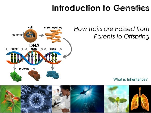 Introduction to Genetics How Traits are Passed from Parents to Offspring Life Science What is Inheritance?