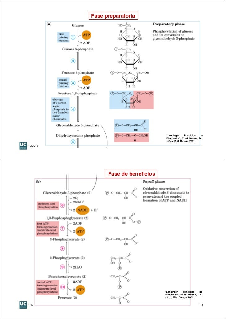 hormonas anabolicas y catabolicas