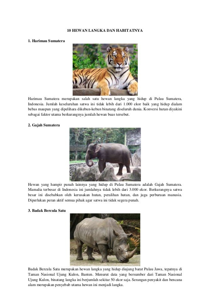 4600 Gambar Hewan Langka Di Sumatera HD Terbaik