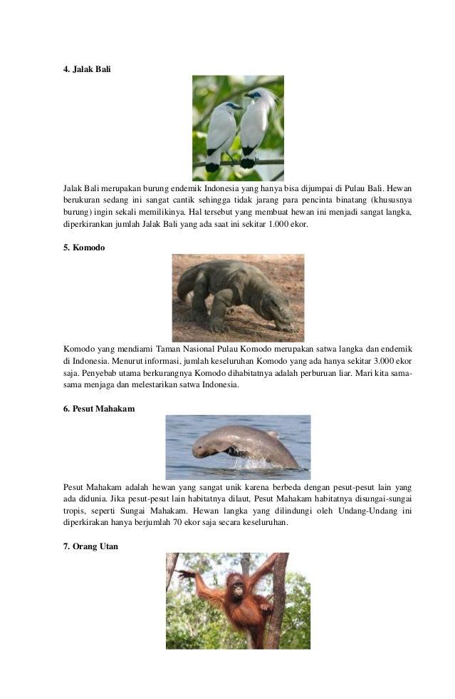 81 Gambar Hewan Langka Dan Habitatnya Gratis Terbaru