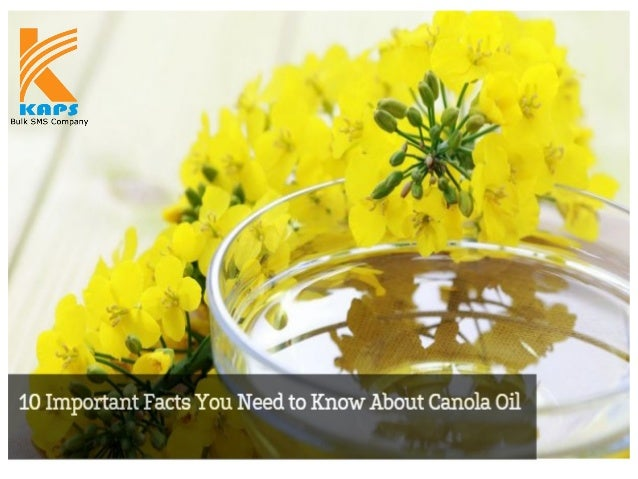 Canola oil, which is produced from tiny canola seeds, is touted as a healthy cooking oil option. Besides its intrinsic fla...