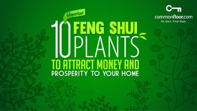 10 Important Feng Shui Plants To Attract Money And