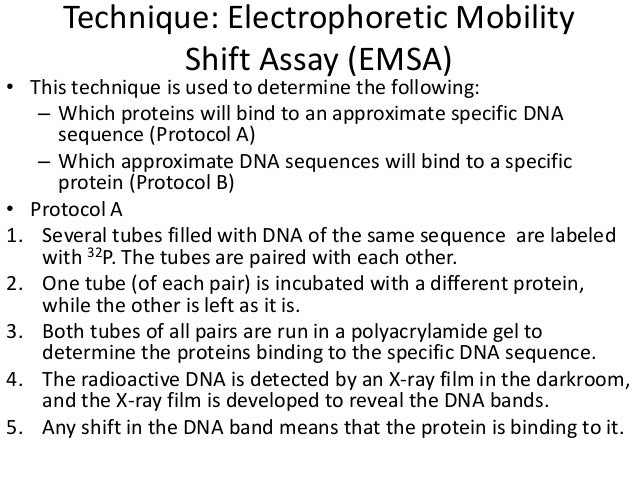 electrophoretic mobility shift assay ppt Electrophoretic mobility shift assay (emsa)/gel shift assay the emsa technique is the most popular technique to detect protein-dna interactions emsa is based on the principle that protein-dna complexes migrate slower than free linear dna fragments in a non-denaturing gel electrophoresis.