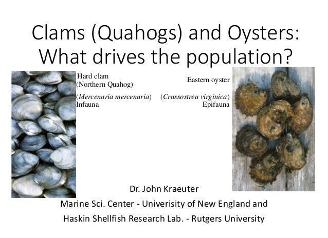 Clams (Quahogs) and Oysters: What drives the population? Hard clam (Northern Quahog) (Mercenaria mercenaria) Infauna  East...