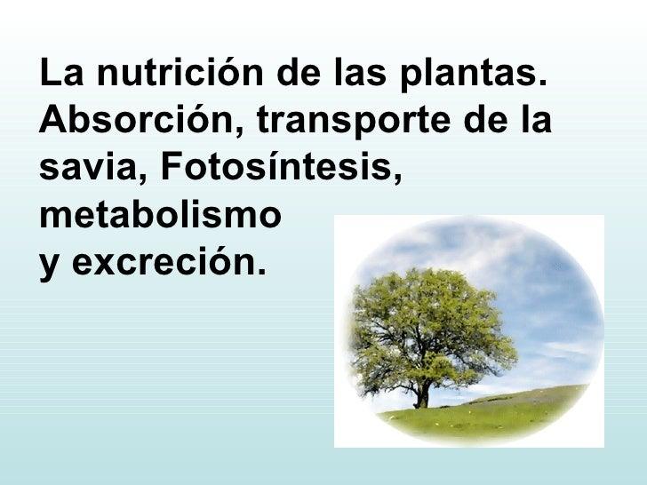 La nutrición de las plantas. Absorción, transporte de la savia, Fotosíntesis, metabolismo  y excreción.