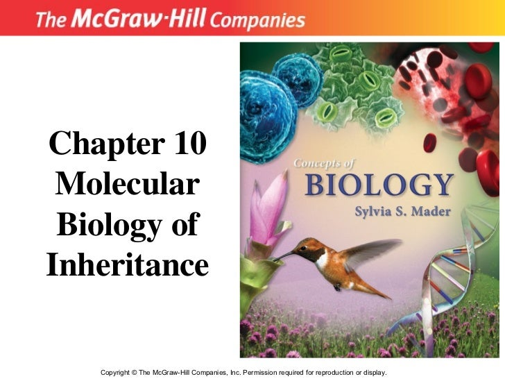 Copyright  ©  The McGraw-Hill Companies, Inc. Permission required for reproduction or display. Chapter 10 Molecular Biolog...