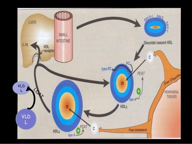 Apo – A1 Apo – B Bad cholesterol LDL Good cholesterol HDL