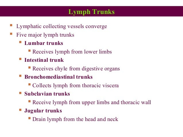 Lymph Trunks  Lymphatic collecting vessels converge  Five major lymph trunks  Lumbar trunks  Receives lymph from lower...