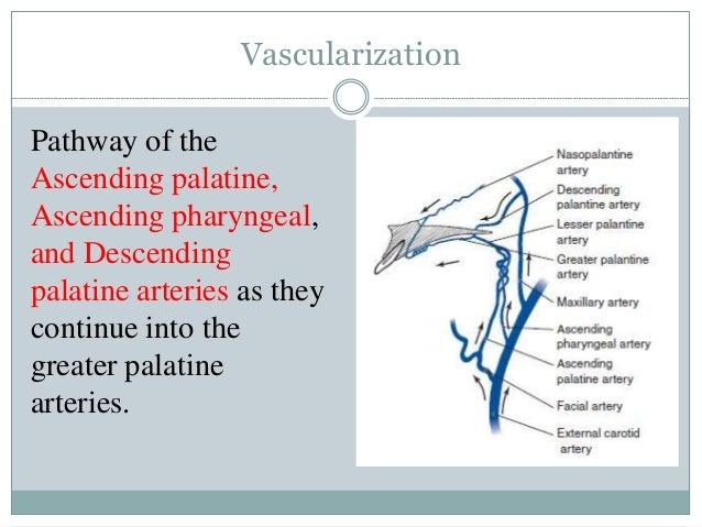 maxillary osteotomy procedures