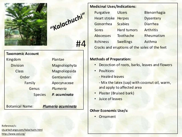 10 Medicinal Plants Found in DLSU-D Botanical Garden
