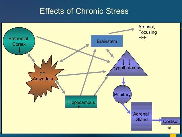 amygdala hippocampus stress