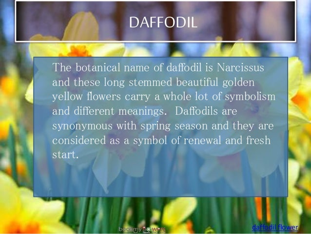10 most beautiful flowers in the world world flowers list beauti daffodil 15 daffodil the botanical name mightylinksfo