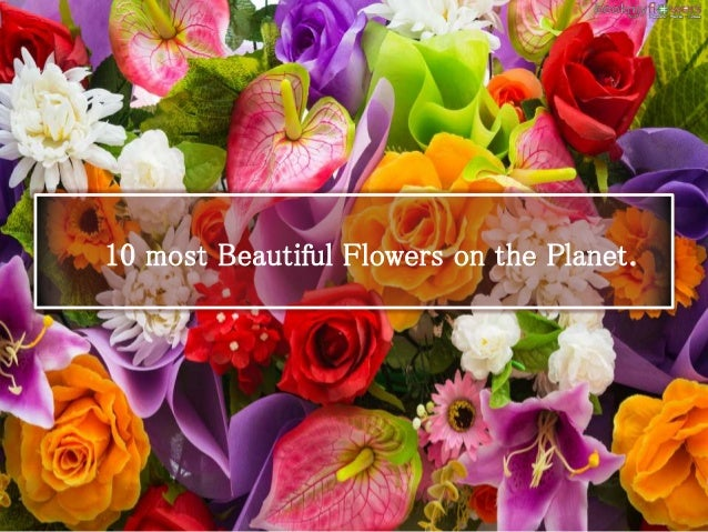 10 Most Beautiful Flowers In The World World Flowers List Beauti