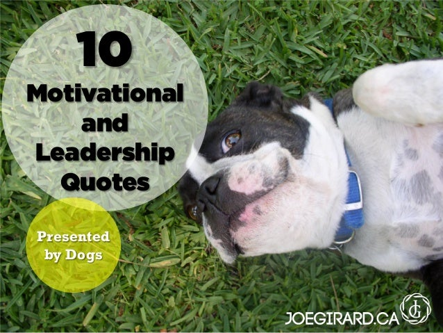 10 Motivational and Leadership Quotes Presented by Dogs