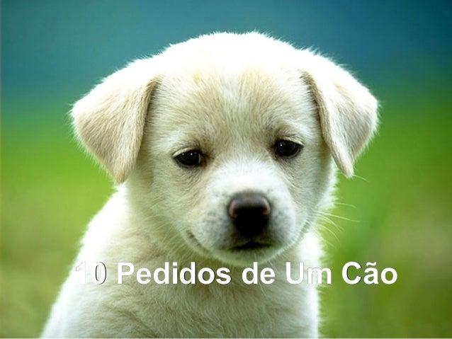 10 Pedidos de Um Cão10 Pedidos de Um Cão