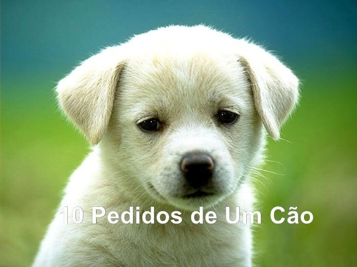 10 Pedidos de Um Cão