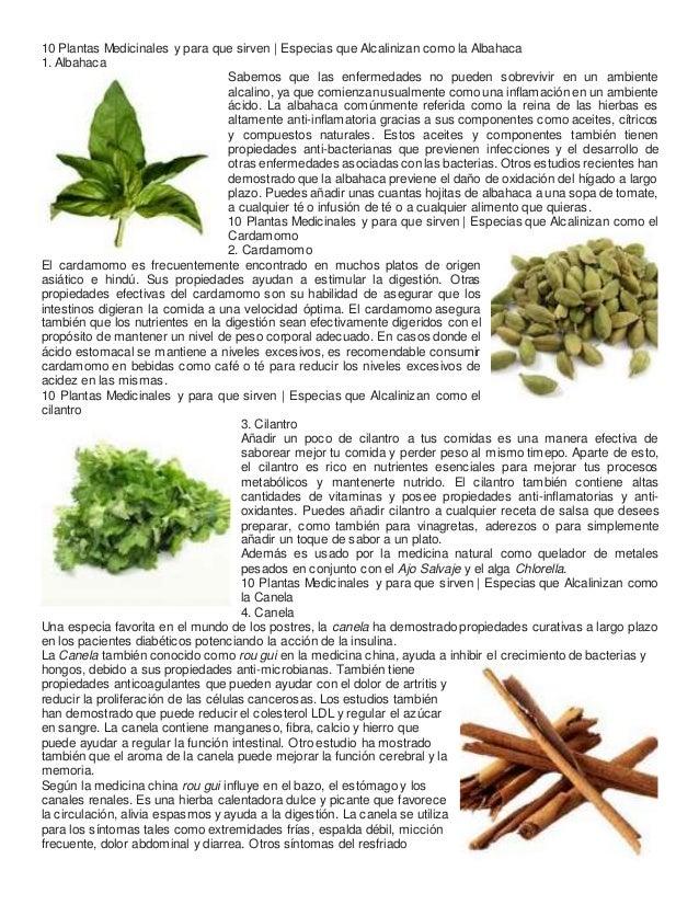 10 plantas medicinales y para que sirven