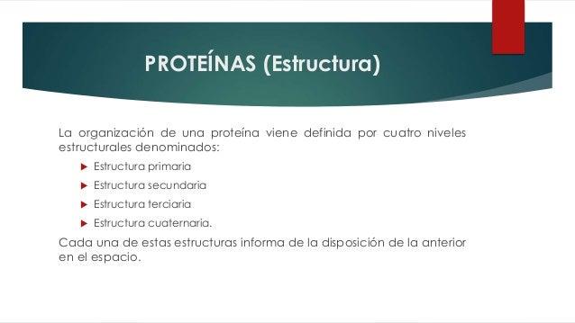 Proteínas Enzimas Hemoglobina