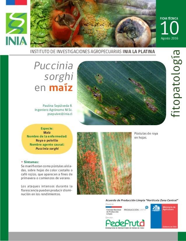 FICHA TÉCNICA 10 INSTITUTO DE INVESTIGACIONES AGROPECUARIAS INIA LA PLATINA fitopatología Paulina Sepúlveda R. Ingeniero A...