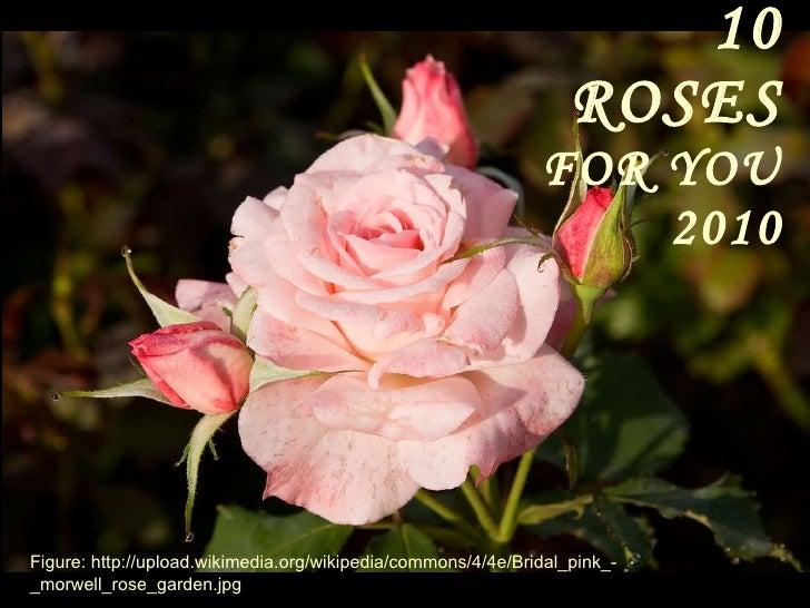 10 ROSES   FOR YOU 2010 Figure: http://upload.wikimedia.org/wikipedia/commons/4/4e/Bridal_pink_-_morwell_rose_garden.jpg