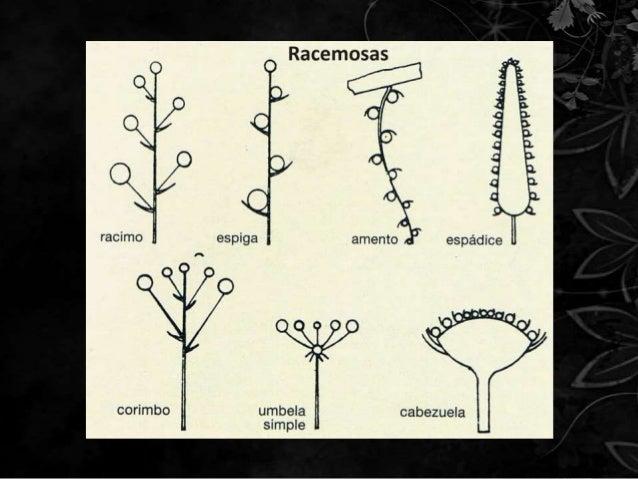 Struktur Bunga Tunggal Dan Bunga Majemuk