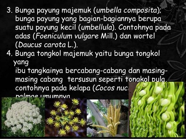Ppt Morfologi Tumbuhan Bunga Majemuk
