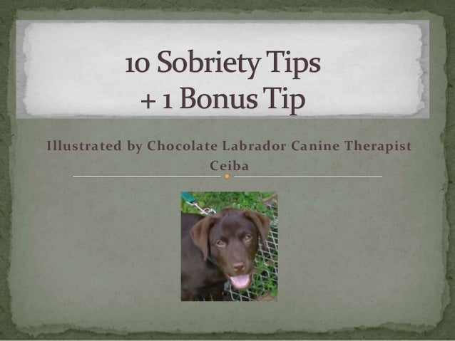 Illustrated by Chocolate Labrador Canine Therapist Ceiba