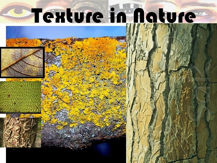 The Visual Elements of Art: TEXTURE