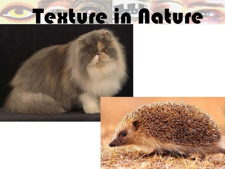 Texture in Nature
