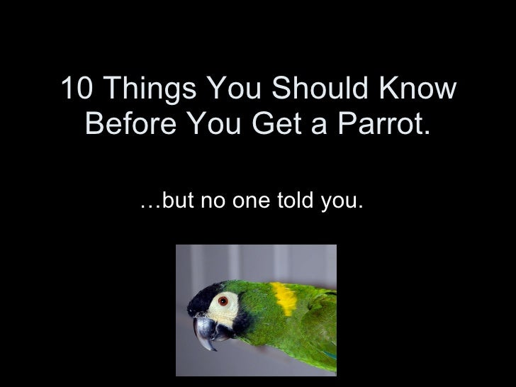 10 Things You Should Know Before You Get a Parrot. …but no one told you.