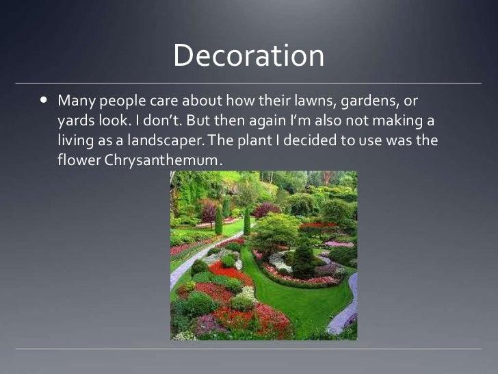 10 Ways We Use Plants
