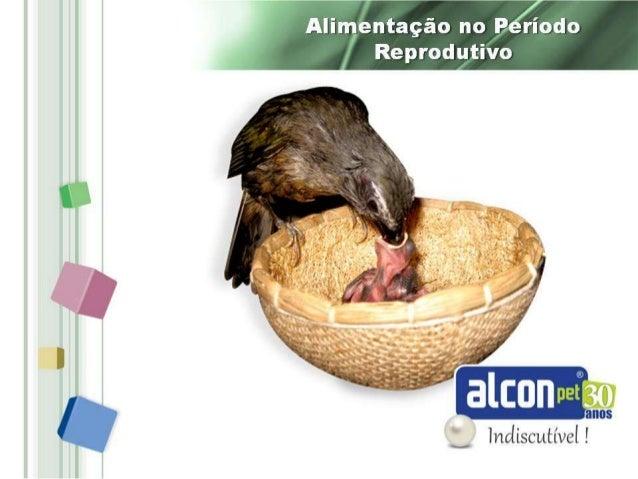 Alimentação das aves no período reprodutivo